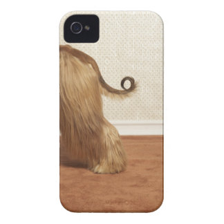 Afghan hound standing in room, end section iPhone 4 case