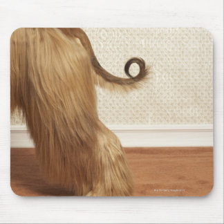 Afghan hound standing in room, end section mouse pad