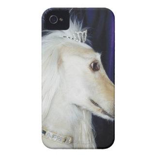 Afghan Hound wearing Tiara iPhone 4 Covers
