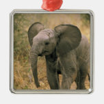 Africa. African elephant, loxodonta africana. Christmas Tree Ornament