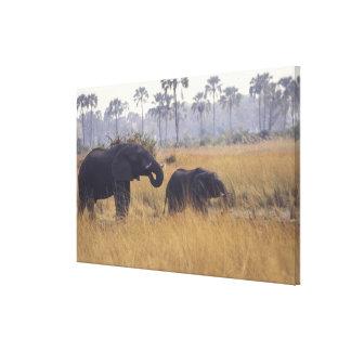 AFRICA, Botswana, African Elephant Canvas Print