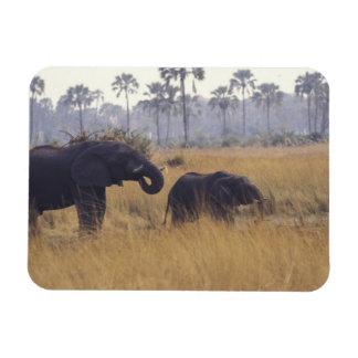 AFRICA, Botswana, African Elephant Rectangular Photo Magnet