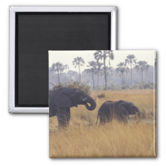 AFRICA, Botswana, African Elephant Square Magnet
