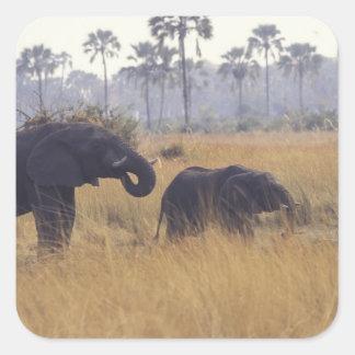 AFRICA, Botswana, African Elephant Square Sticker