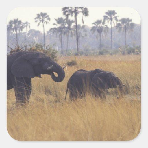 AFRICA, Botswana, African Elephant Stickers