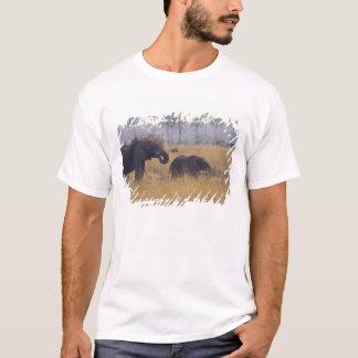 AFRICA, Botswana, African Elephant T-Shirt