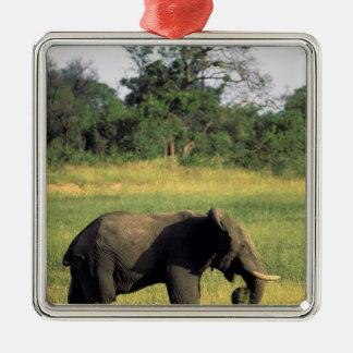 Africa, Botswana, Chobe National Park. Elephant Christmas Ornament