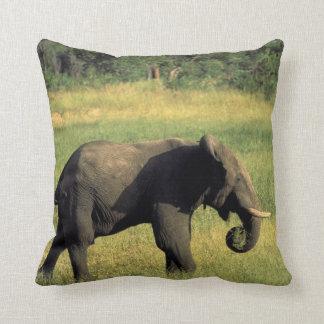 Africa, Botswana, Chobe National Park. Elephant Cushion