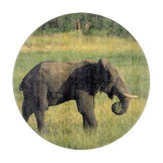 Africa, Botswana, Chobe National Park. Elephant Cutting Board