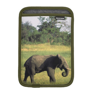 Africa, Botswana, Chobe National Park. Elephant iPad Mini Sleeve