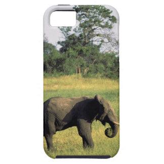 Africa, Botswana, Chobe National Park. Elephant iPhone 5 Case
