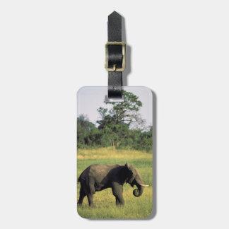 Africa, Botswana, Chobe National Park. Elephant Luggage Tag