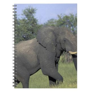 AFRICA, Botswana, Chobe National Park, Elephant Note Books