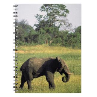 Africa, Botswana, Chobe National Park. Elephant Notebooks