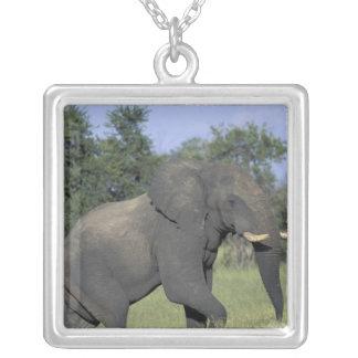 AFRICA, Botswana, Chobe National Park, Elephant Silver Plated Necklace