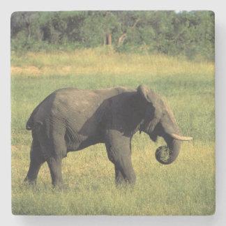 Africa, Botswana, Chobe National Park. Elephant Stone Coaster