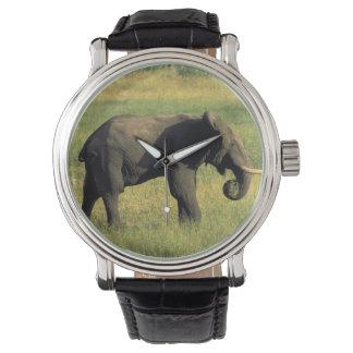 Africa, Botswana, Chobe National Park. Elephant Watch