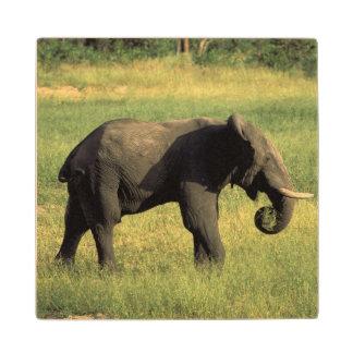 Africa, Botswana, Chobe National Park. Elephant Wood Coaster