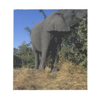 Africa, Botswana, Chobe National Park, Elephants Notepad