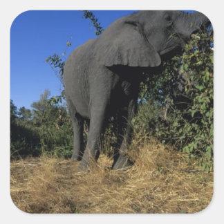 Africa, Botswana, Chobe National Park, Elephants Square Sticker