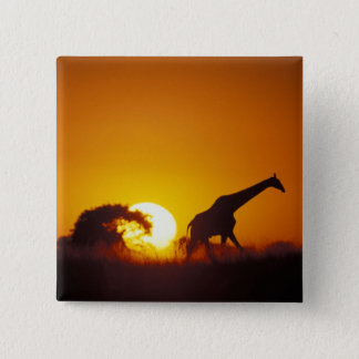 Africa, Botswana, Chobe National Park, Giraffe 2 15 Cm Square Badge