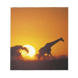 Africa, Botswana, Chobe National Park, Giraffe 2 Notepad
