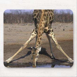 Africa, Botswana, Chobe National Park, Giraffe Mouse Mat
