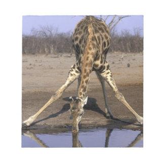 Africa, Botswana, Chobe National Park, Giraffe Notepad