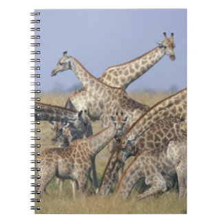 Africa, Botswana, Chobe National Park, Herd of 2 Notebooks