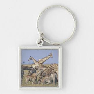 Africa, Botswana, Chobe National Park, Herd of 2 Silver-Colored Square Key Ring