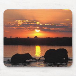 Africa, Botswana, Chobe National Park, Herd of Mouse Mat