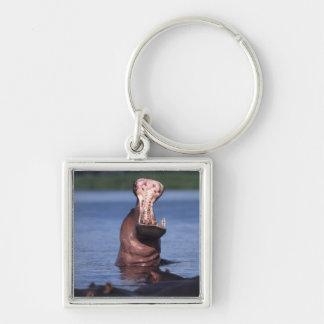 Africa. Botswana. Chobe National Park. Hippo Key Ring