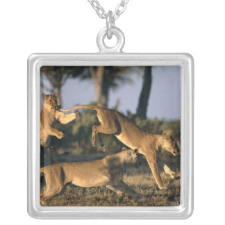 Africa, Botswana, Chobe National Park, Lionesses Silver Plated Necklace
