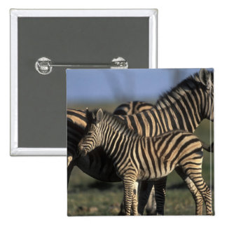 Africa, Botswana, Chobe National Park, Plains 15 Cm Square Badge