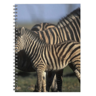 Africa, Botswana, Chobe National Park, Plains Notebook