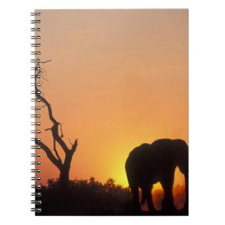 Africa, Botswana, Chobe National Park, Setting Notebooks