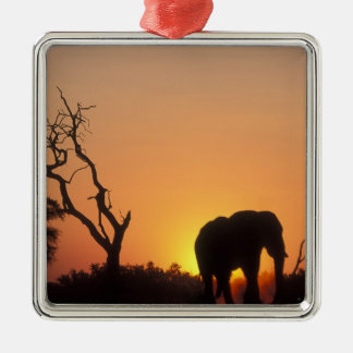 Africa, Botswana, Chobe National Park, Setting Silver-Colored Square Decoration