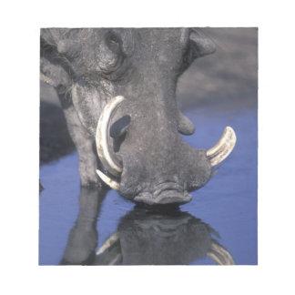 Africa, Botswana, Chobe National Park, Warthog Notepad