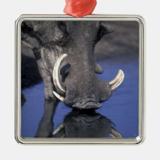 Africa, Botswana, Chobe National Park, Warthog Silver-Colored Square Decoration