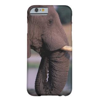 Africa, Botswana. Elephant (Loxodanta Africana) Barely There iPhone 6 Case