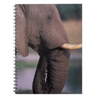 Africa, Botswana. Elephant (Loxodanta Africana) Notebook