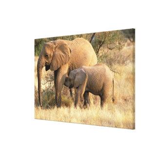 Africa, Botswana, Moremi. Elephant nursing Stretched Canvas Print