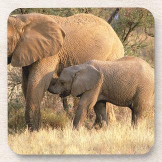 Africa, Botswana, Moremi. Elephant nursing Coaster