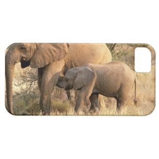 Africa, Botswana, Moremi. Elephant nursing iPhone 5 Cover