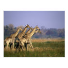Africa, Botswana, Moremi Game Reserve, Herd of Postcard