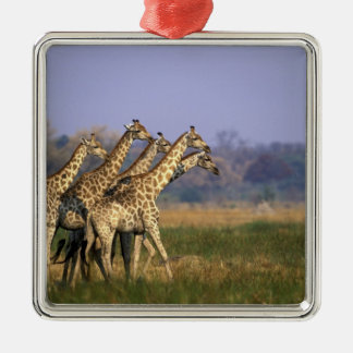 Africa, Botswana, Moremi Game Reserve, Herd of Silver-Colored Square Decoration