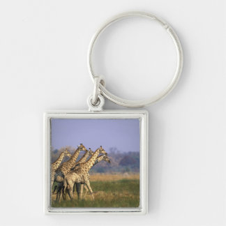 Africa, Botswana, Moremi Game Reserve, Herd of Silver-Colored Square Key Ring