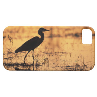 Africa, Botswana, Moremi Game Reserve, iPhone 5 Covers