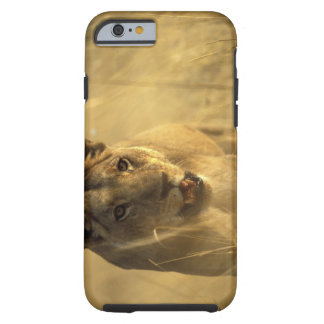Africa, Botswana, Moremi Game Reserve, Lioness Tough iPhone 6 Case