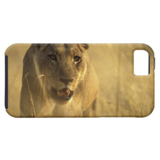 Africa, Botswana, Moremi Game Reserve, Lioness iPhone 5 Cover
